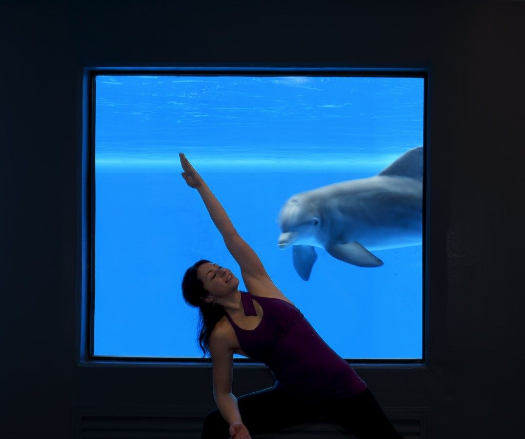 Yoga with Dolphins at the Mirage